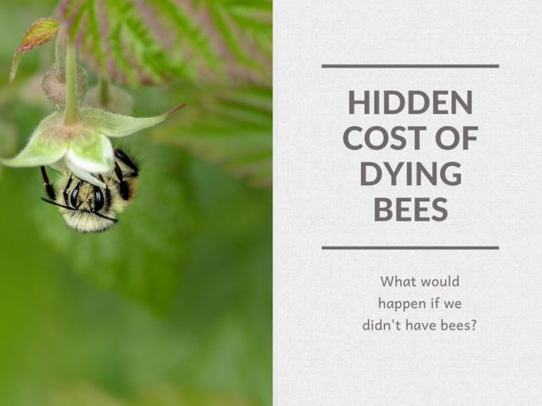 Hidden Cost of Dying Bees